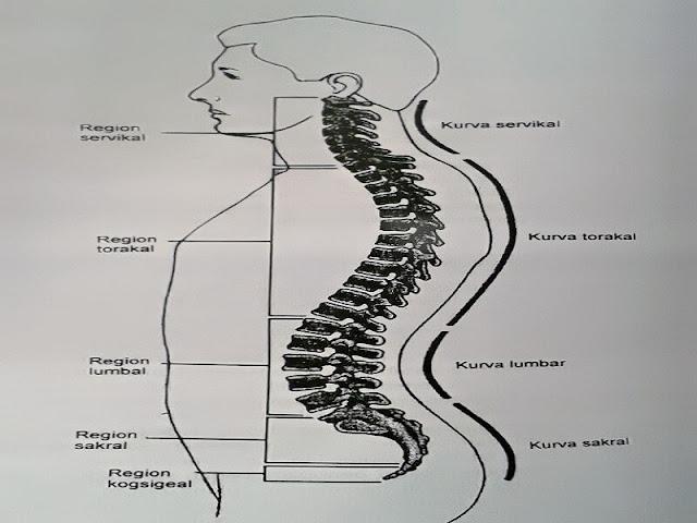 Gambar Penyebab Dan Gejala Osteoporosis Serta Cara Mengobati