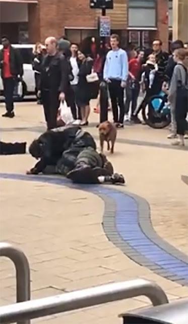 Perro se entromete en pelea de humanos para 'montarlos'