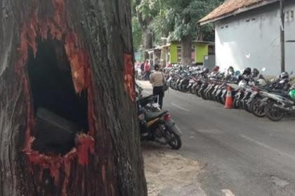 Heboh batang pohon mahoni tua di Bandung keluar api dan  asap