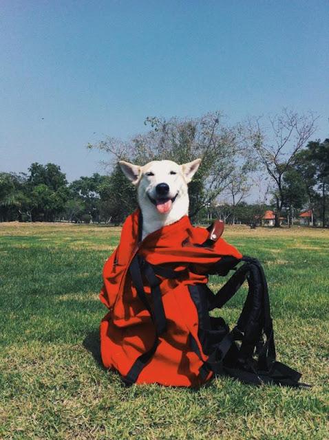 Bị bỏ rơi, bị ung thư và bây giờ là chú chó hạnh phúc nhất thế gian