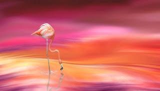 phony flamingos on earth