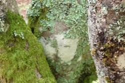 https://emanants.blogspot.com/2020/02/les-ornements-de-la-nature.html