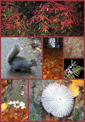 squirrel rozelle park ayr fungi autumnal