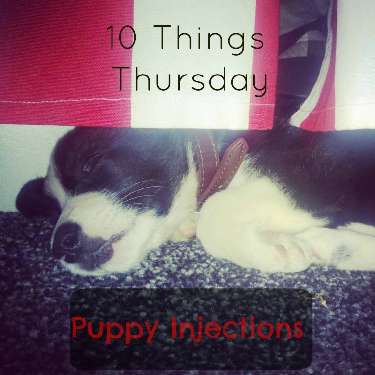 Ten Things Mollie Learned From Puppy Injections: Ten Things Thursday