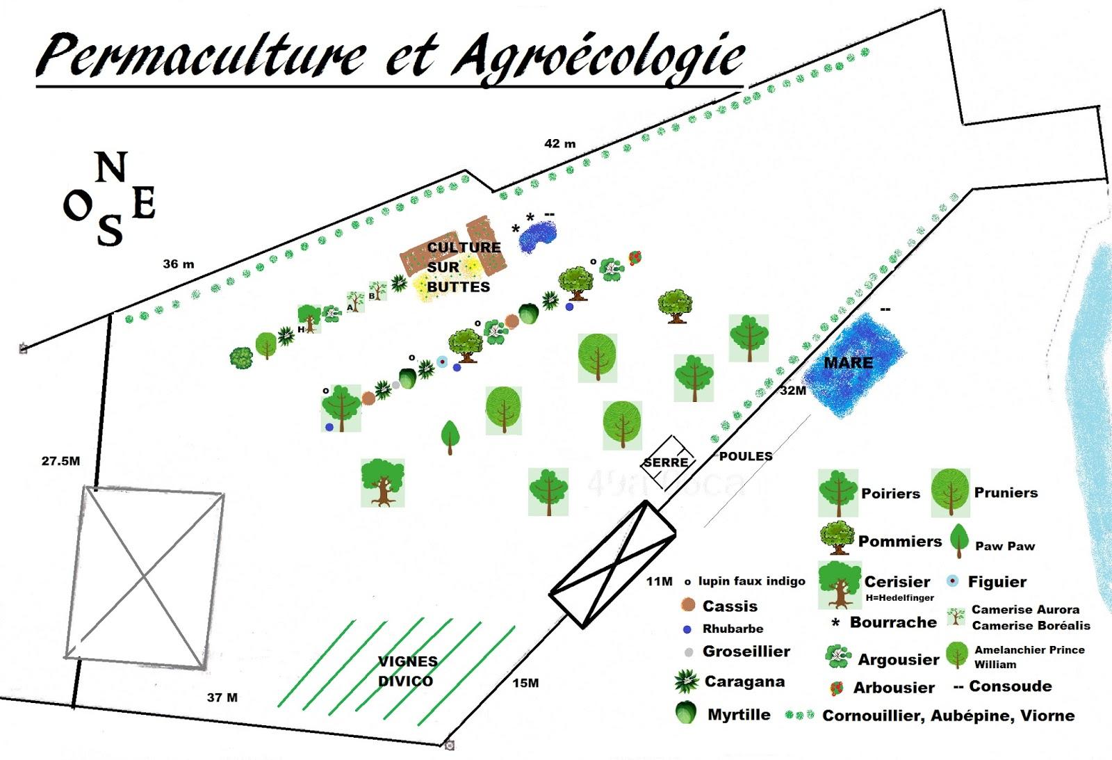 Potager permaculture et petit levage plan du futur for Plan permaculture