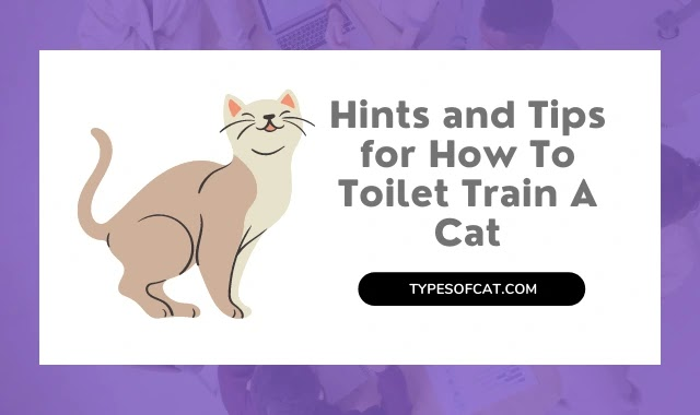 Hints and Tips for How To Toilet Train A Cat