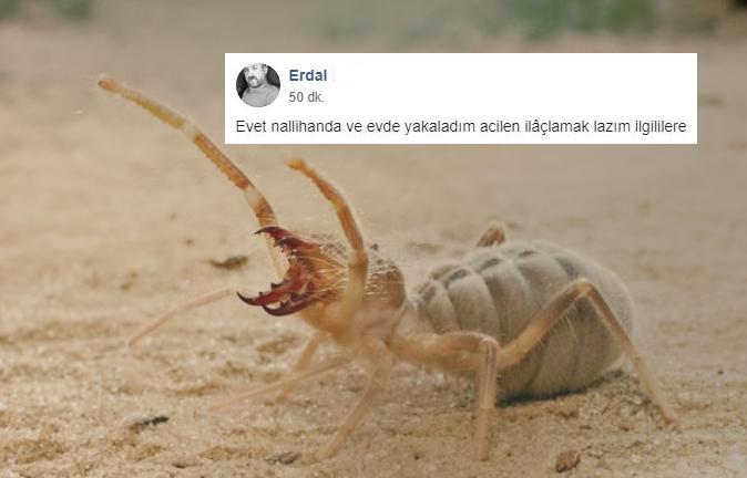 Komşu Nallıhan'da Sarıkız Örümceği Paniği