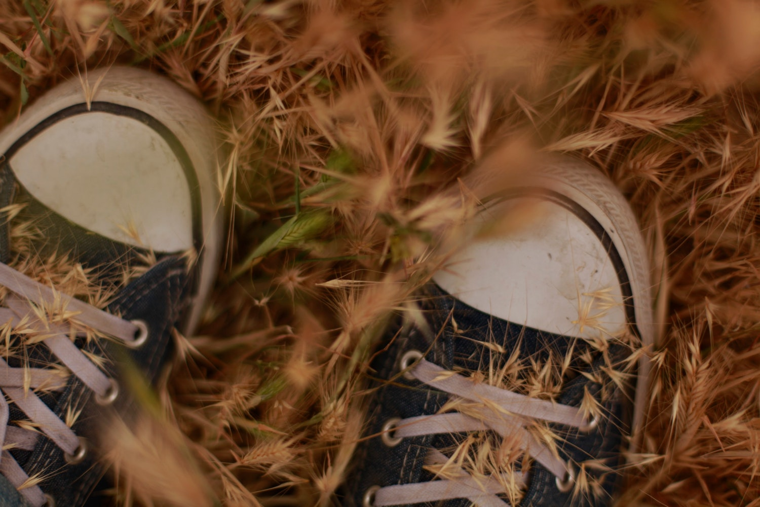 cute sneakers in the autumn field