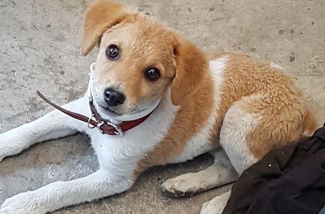 Ναύπλιο: Μήπως χάσατε το σκυλάκι σας;