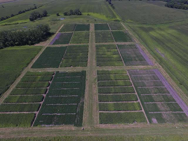 field trialMinnesota Wells optimal wavebands sensor-based nutrient management