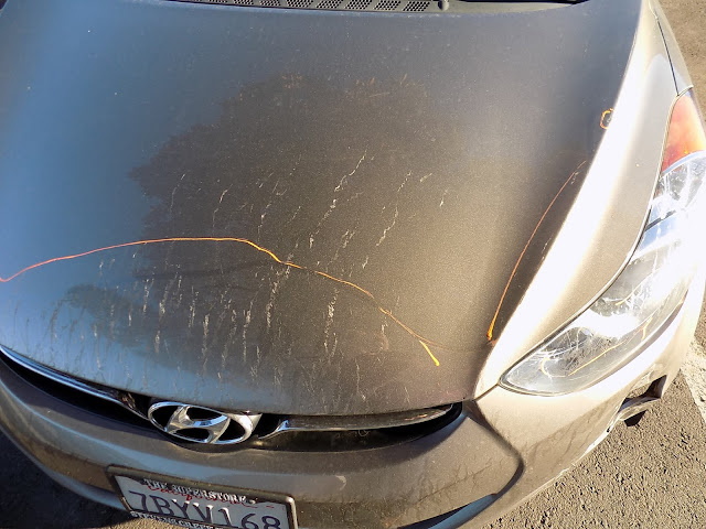 Hyundai Elantra with scraped hood, bumper and headlights before repairs at Almost Everything Auto Body.