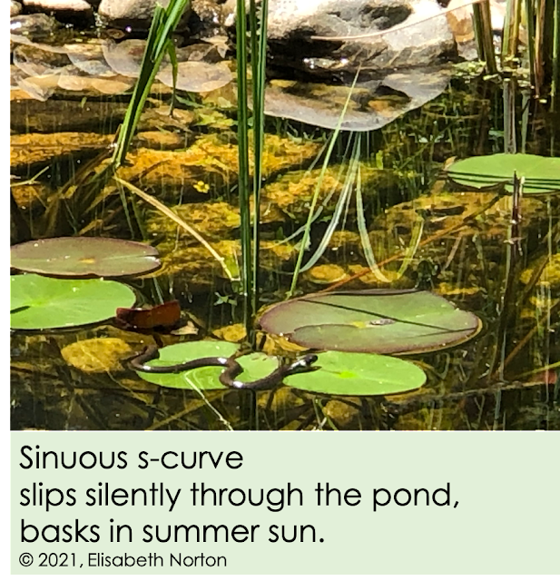 Photo of a pond with a snake basking in the sun on a lily pad. Poem below reads: sinuous s-curve slips silently through the pond basks in summer sun. copyright 2021 by Elisabeth Norton