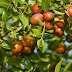 To πανάρχαιο και υγιεινό super fruit που πρόκειται να γίνει η νέα σου εμμονή!