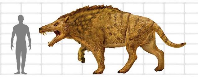 Tamaño del Andrewsarchus Mongoliensis comparado con un humano