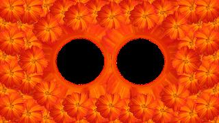 1 Moldura flor laranja especial 2 fotos png