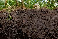 Soil organic matter (Credit: deeproot.com) Click to Enlarge.
