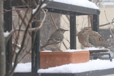 "View one of three images atop this entry. This picture shows two birds standing on a garden shelf during a snowfall. A Northern mockingbird is on the left and a Mourning dove is on the right.  These bird types are featured in my book series, ""Words In Our Beak."" Info re my books is included within another post on this blog @ https://www.thelastleafgardener.com/2018/10/one-sheet-book-series-info.html"