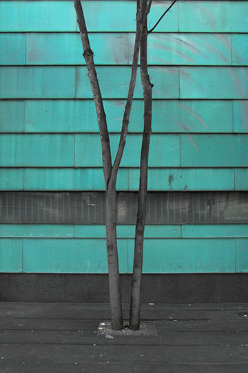 urban photography, contemporary, city life, urban photo, trees, green, Sam Freek,