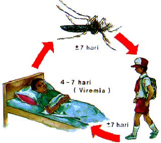 https://mustahabbah.blogspot.com/2017/07/gejala-demam-berdarah-dengue-dbd-dan.html