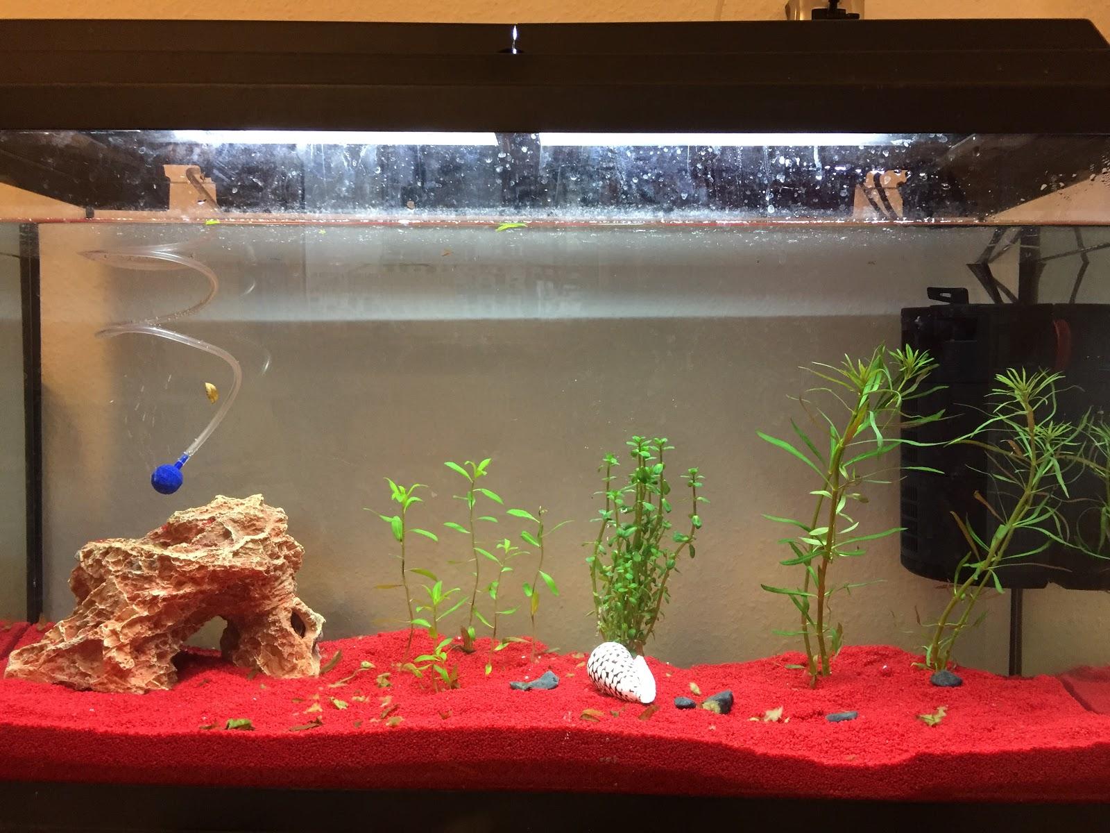 Tief im westen ein aquarium f r s kinderzimmer for Aquarium im kinderzimmer