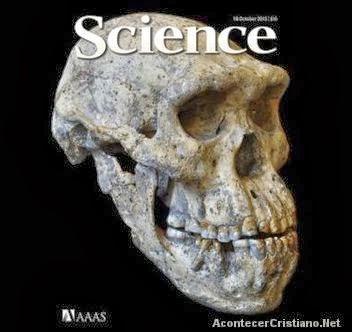 Cráneo cuestiona la evolución
