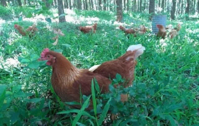 Rússia detecta primeiros casos de gripe aviária em humanos