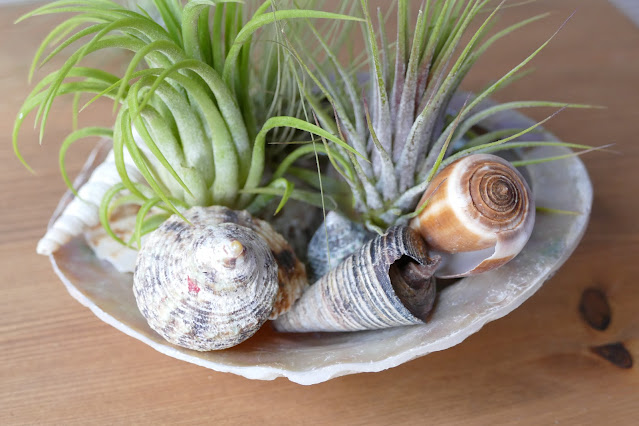 Craftmoor Review, airplants uk, air plant decor uk, air plant decoration buy, air plant decorations uk, how to decorate air plants, how to care air plants, air plant decoration