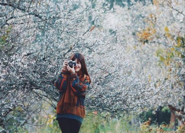 Xao xuyến mùa hoa mận Mộc Châu