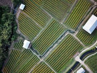 Types Of Irrigation
