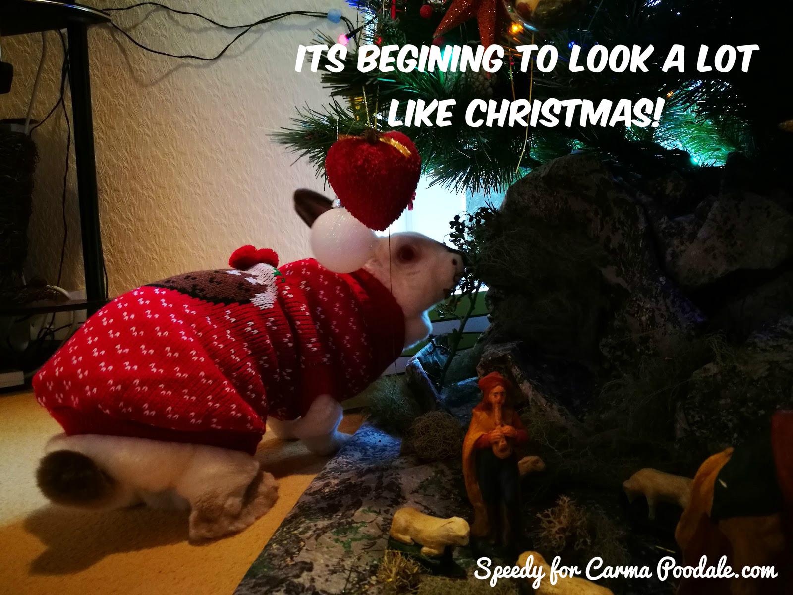 Dog Christmas Tree Meme.Carma Poodale Bunny Meme Christmas