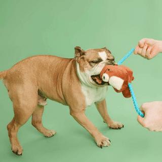 cães e seu brinquedo favorito