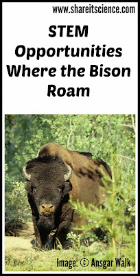 STEM Lesson Wood Bison Reintroduction