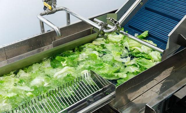 Máy rửa rau công nghệ