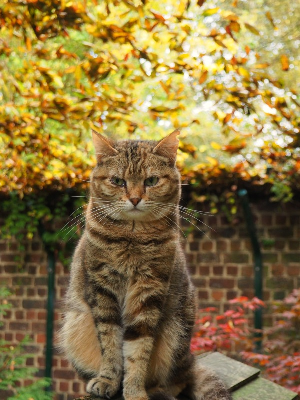 cats autumn pictures