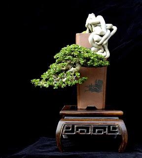 gambar bonsai
