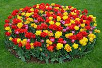 images%2B%25289%2529 صور ورد طبيعي ,أجمل وأفضل اشكال الورد الطبيعي بالصور