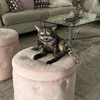 Conoce a Kitzia, la gata gruñona