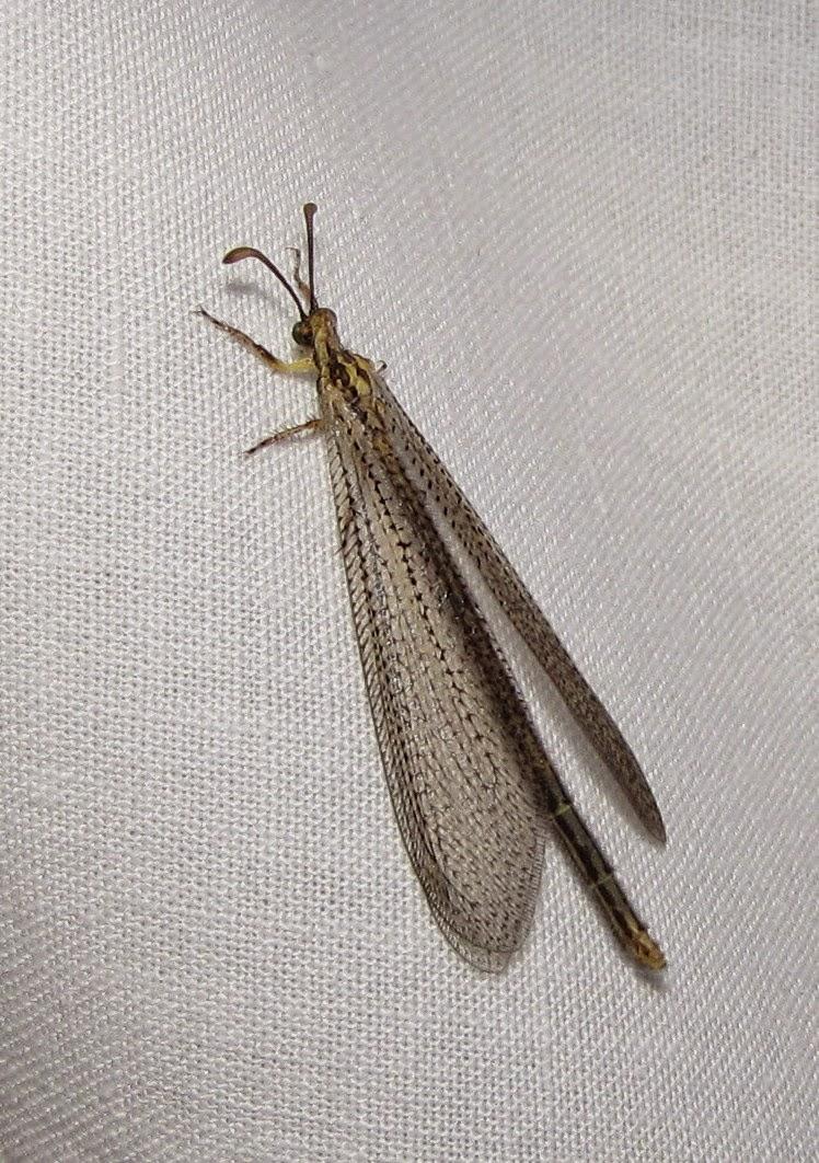 Bug Eric October 2014