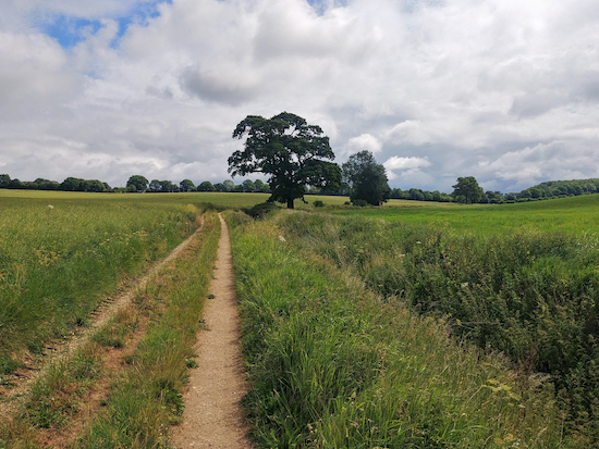 The oak tree on Ardeley footpath 36 mentioned in point 8 below Image by Hertfordshire Walker released via Creative Commons BY-NC-SA 4.0