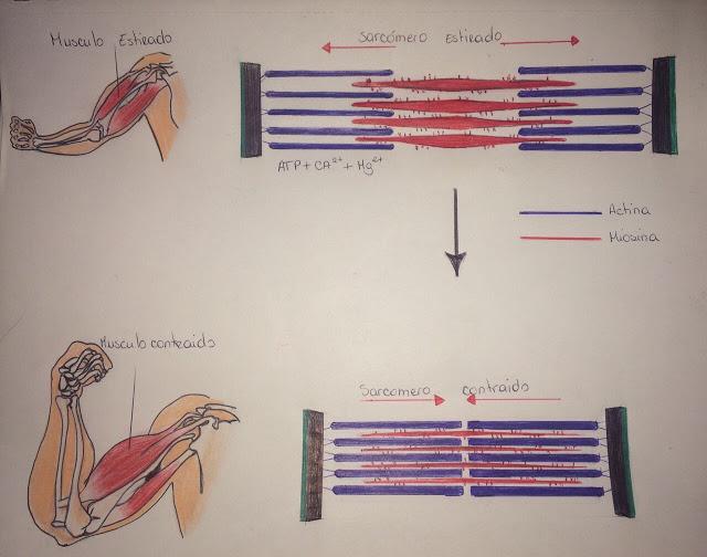 Laboratorio Anatomia P.F