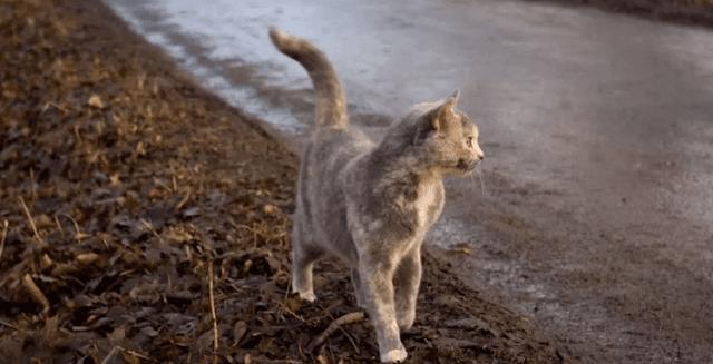 Кошка Пуша каждый день бросала своих новорожденных малышей и убегала в лес