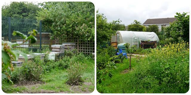 stonebridge city farm nottingham