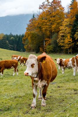 Talwanderung Inzell | Herbstwandern im Chiemgau | Moor-Erlebnis-Pfad und Reifenrutsche Kesselalm 12