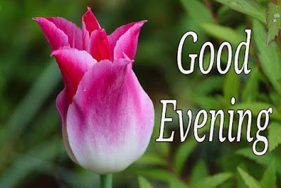 Good evening sms with flowers images