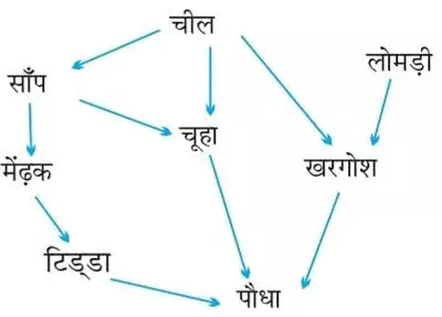 10 Class Science Notes in hindi chapter 15 Our Environment