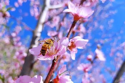 Honey New Zealand – Special Honey from Manuka Flowers