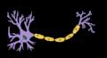 Çka është Neuroni?, roli i neuronit, neuroni roli i tij, cili eshte funksioni i neuronit, cka eshte neuroni