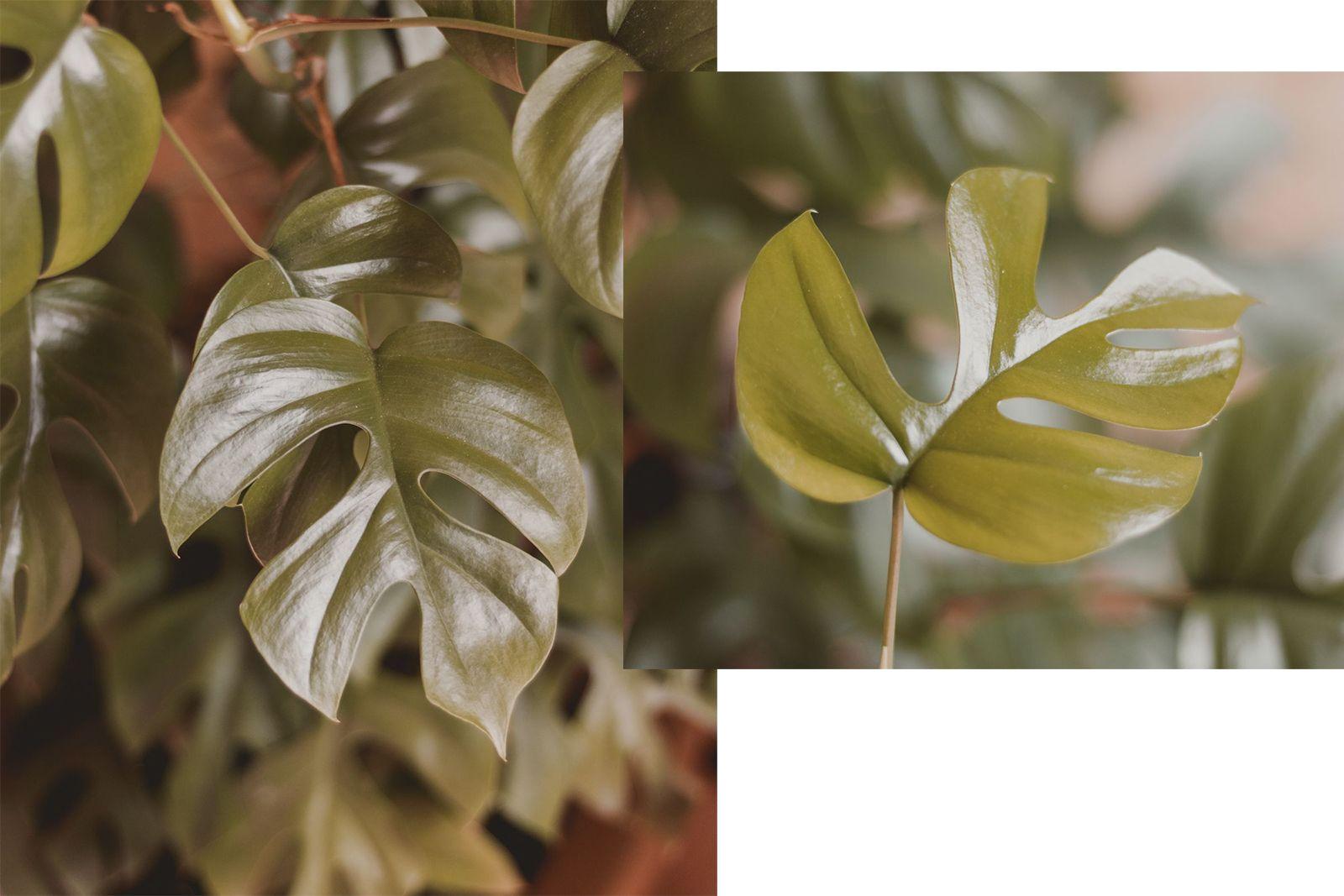 Adoradores de plantas | Houseplant jungle plantas no bidê