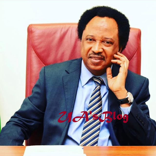 $25,000 Extortion Saga: EFCC Confronts Shehu Sani With 13 Audio Tapes Of Alleged Deal With Bizman