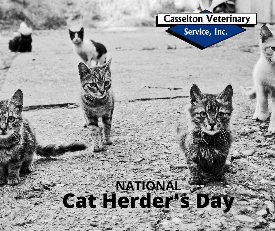 National Cat Herders Day Wishes Lovely Pics